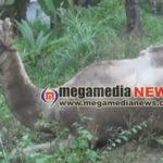 camel-died