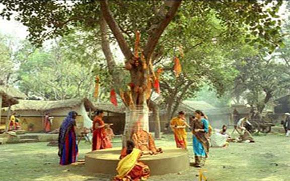 banni-tree