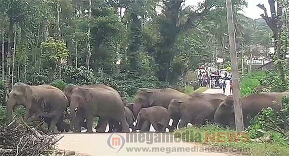 Kodagu Elephant